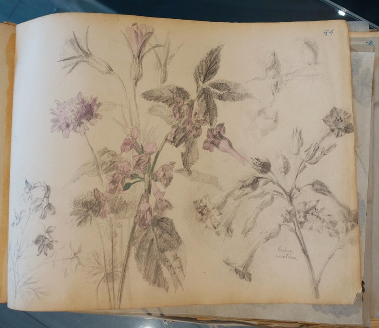 Book of botany study ,Flowers,  50 works,  watercolors   cm. 25 x 32       1885 - Gray Still-Life by Unknown