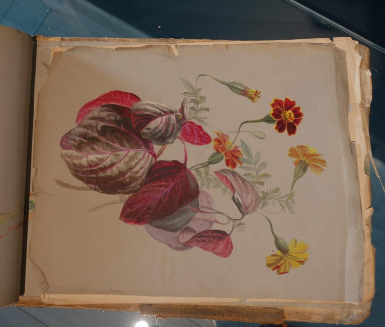 Book of botany study ,Flowers,  50 works,  watercolors   cm. 25 x 32       1885 For Sale 1
