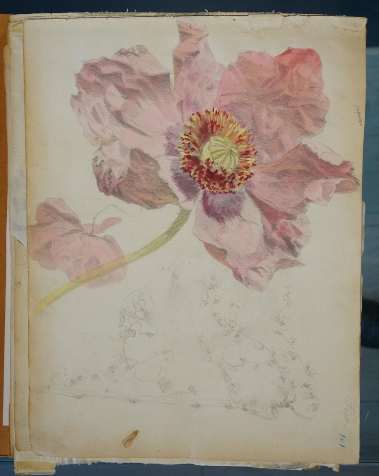 Book of botany study ,Flowers,  50 works,  watercolors   cm. 25 x 32       1885 For Sale 2