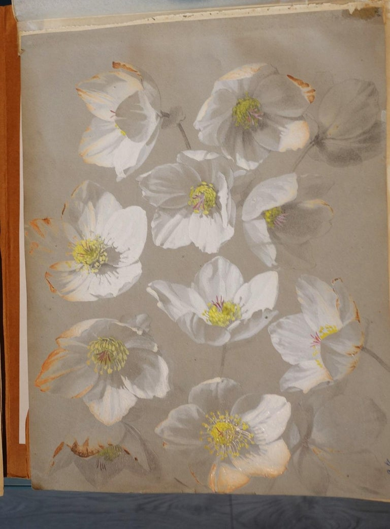 Book of botany study ,Flowers,  50 works,  watercolors   cm. 25 x 32       1885 For Sale 3