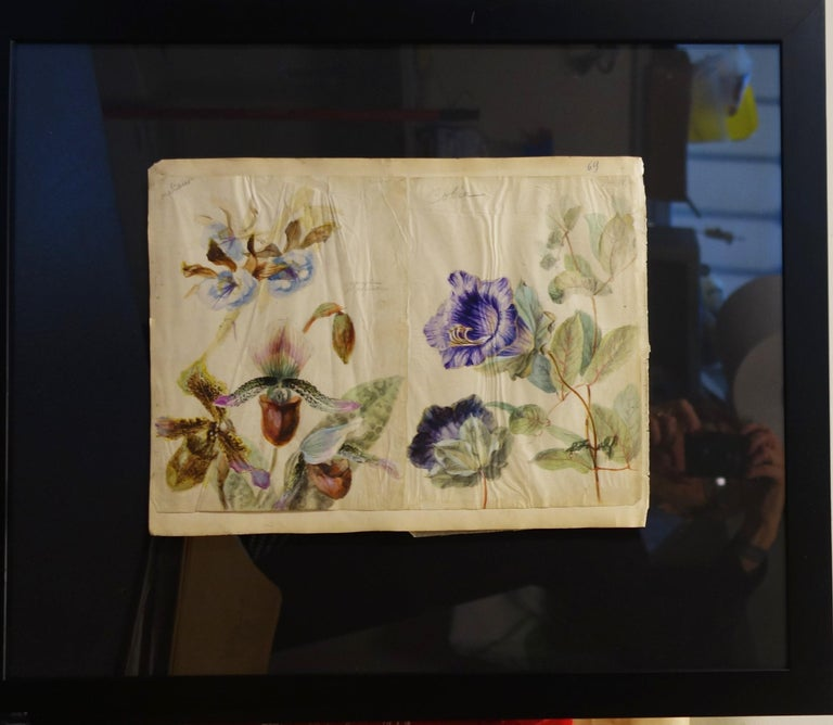 Book of botany study ,Flowers,  50 works,  watercolors   cm. 25 x 32       1885 For Sale 5