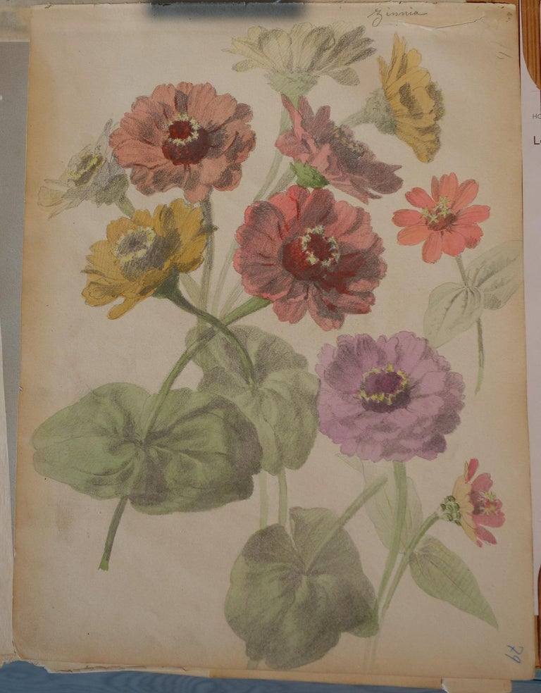 Book of botany study ,Flowers,  50 works,  watercolors   cm. 25 x 32       1885 For Sale 6