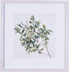 Large olive branch