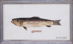 Surrealist, French, 20th Century picture of a herring by Georges Malkine