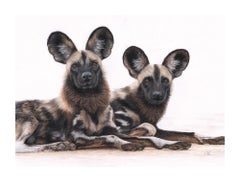 Contemporary wildlife drawing of wild dogs by British born Charlotte Williams