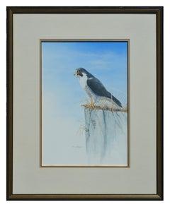 Peregrine Falcon on Edge