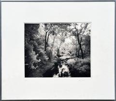 Saratoga Battlefield Creek Landscape