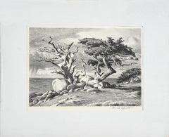 The Veteran Cypress, Carmel Landscape