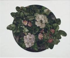 Primula Polyanthus (Primrose) Botanical Etching
