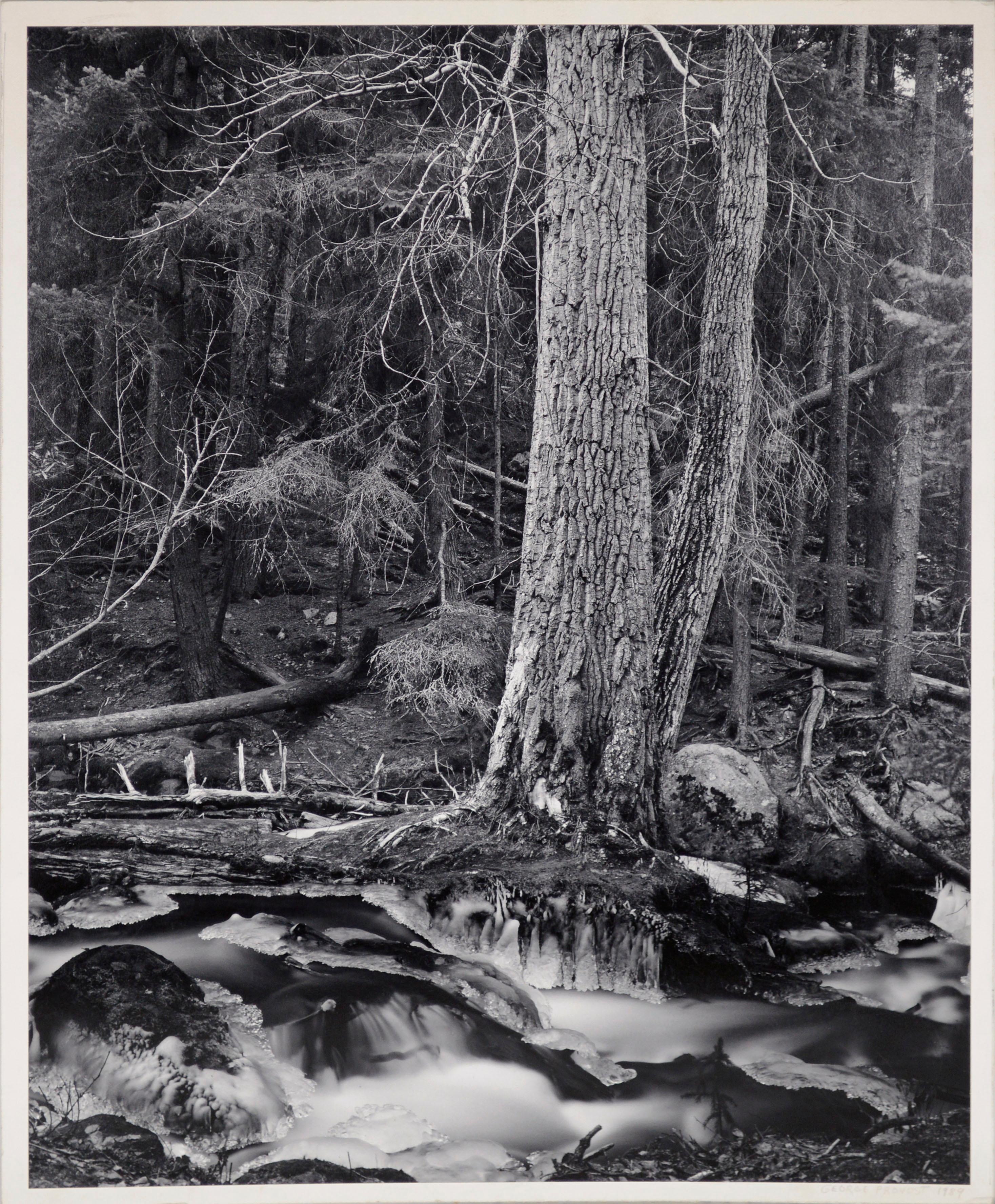 Alaska Forest Stream - Black & White Landscape Photograph