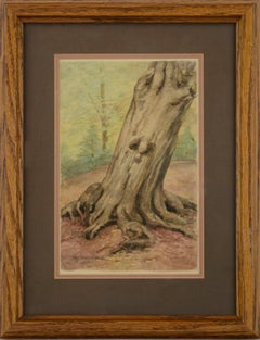Sycamore Tree with Burl - Early 20th Century Forest Landscape