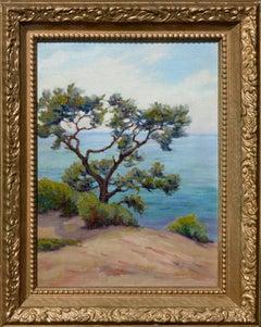 A Torrey Pine, Dan Diego, California