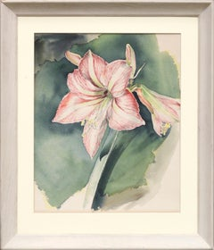 Amaryllis Blossom Watercolor