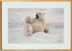 """Feels Good"" Polar Bear Photograph - Signed and Numbered - Rare"