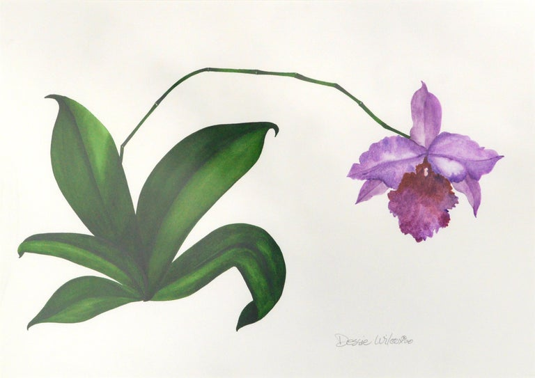 Purple Orchid For Sale 1