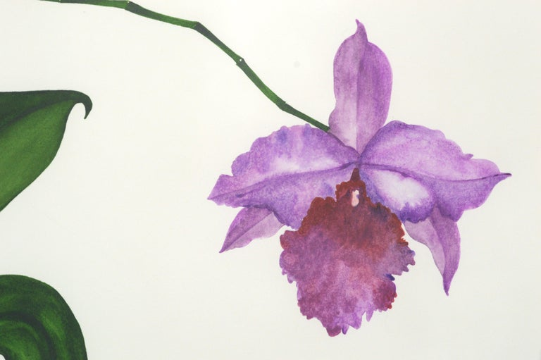 Purple Orchid For Sale 2