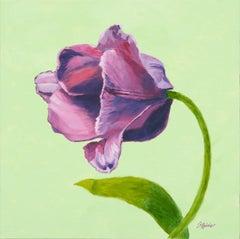 Magenta Tulip - Still Life