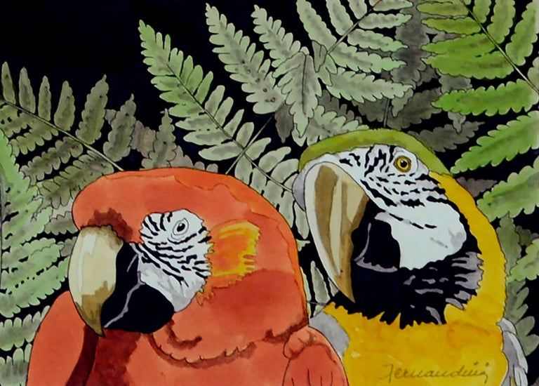 Scarlett Macaw Parrots and Ferns Watercolor  - Black Animal Art by Unknown