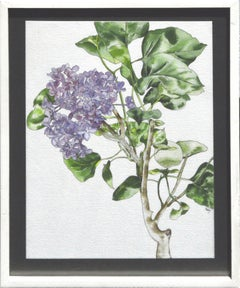 Lilacs - Botanical Study