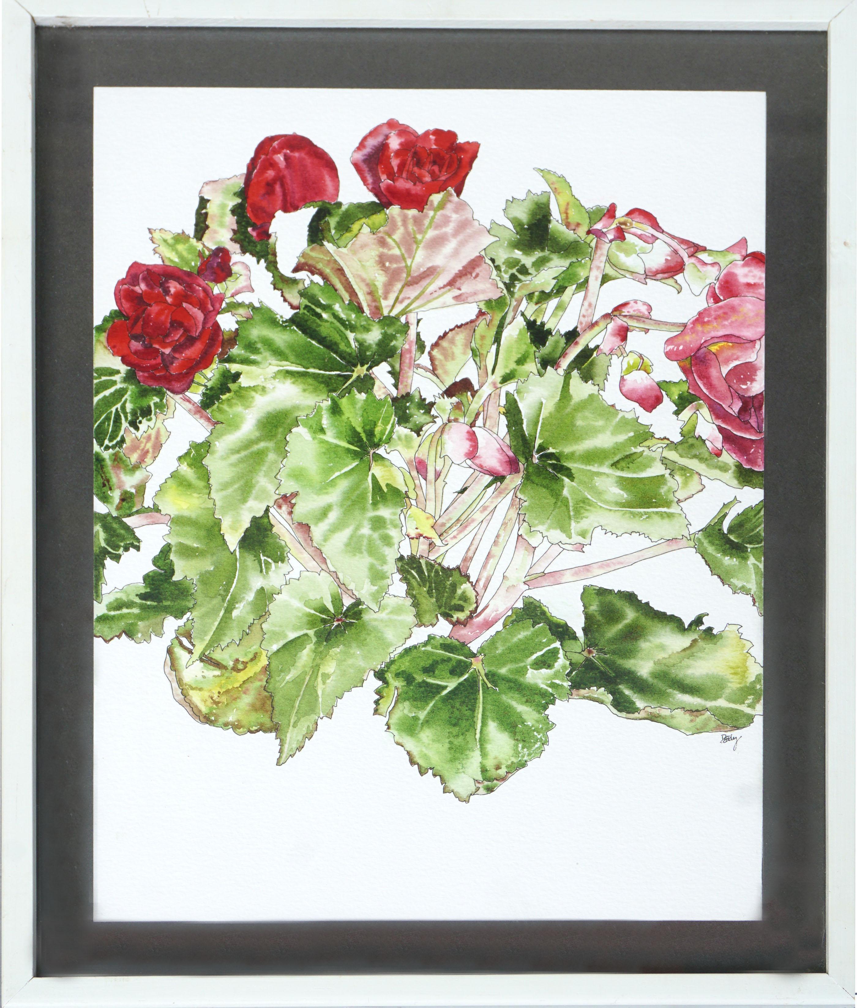 Red Begonia - Botanical Study