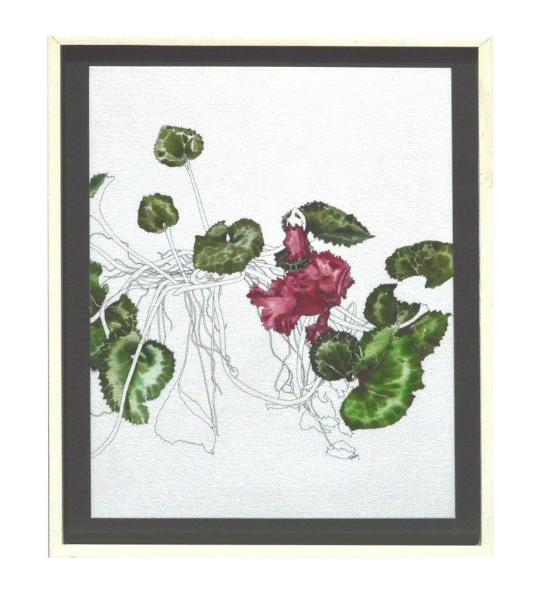 Deborah Eddy Still-Life - Cyclamen - Botanical Study