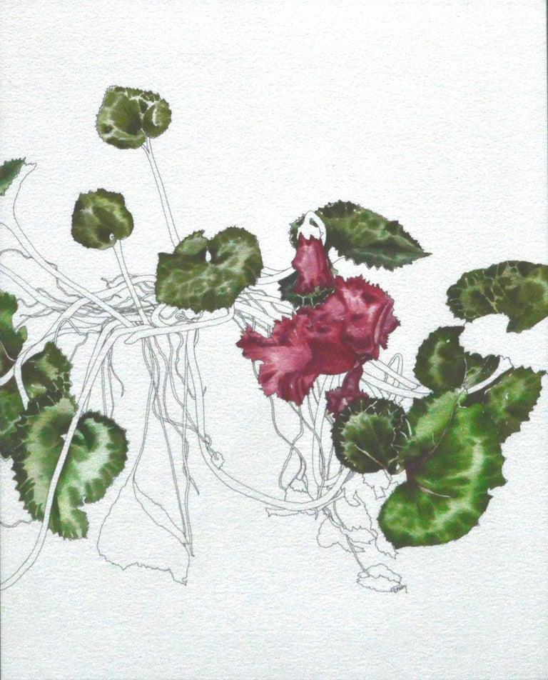 Cyclamen - Botanical Study  - Art by Deborah Eddy