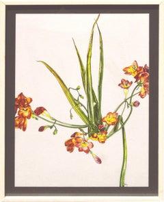 Freesia - Botanical Study