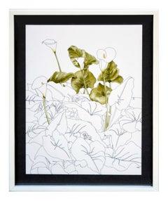 Calla Lily  - Botanical Study