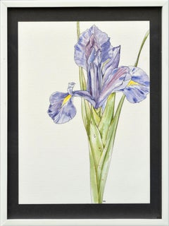 Iris  - Botanical Study