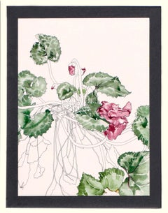 Cyclamen - Botanical Study