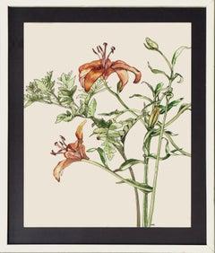 Tiger Lily - Botanical Study