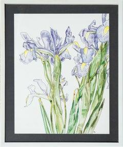 Japanese Iris - Botanical Study