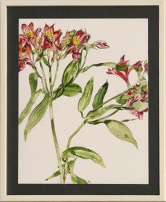 Peruvian Lily - Botanical Study