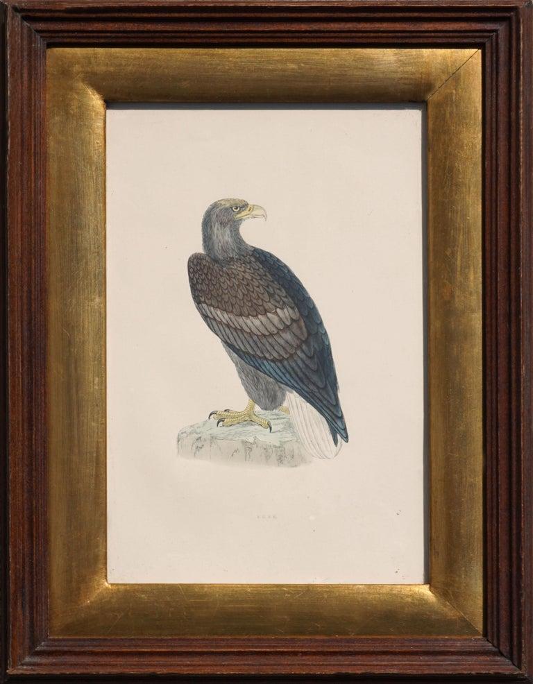Alexander Francis Lydon  Figurative Print - Mid-19th Century Erne Sea Eagle - Hand Colored Ornithology Engraving