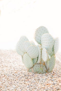 """Cacti Corner,"" Contemporary Botanical Photograph, 36"" x 24"""