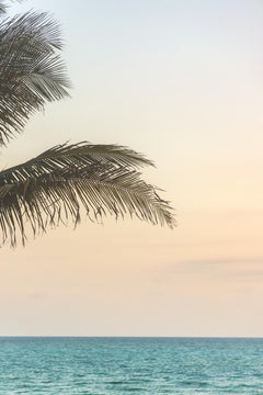 Miami Peek of Palm - color photography