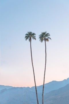 Twin Palms - color photography