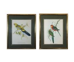 Colorful Australian Birds Engraving Set