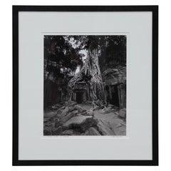 """""""Strangler Fig Tree"""" Ta Prohm, Cambodia Black and White Landscape Photograph"""