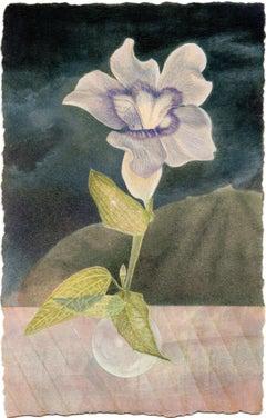 Blue Thumbergia