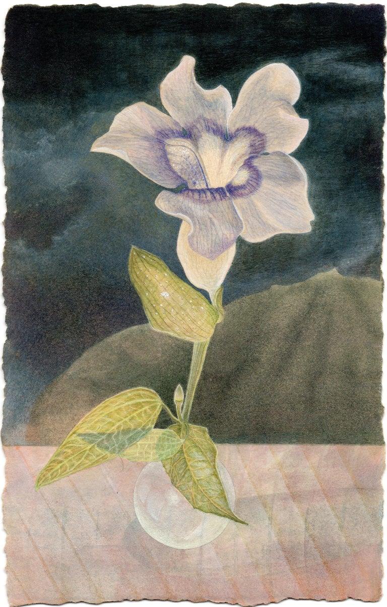 Christina Haglid Still-Life - Blue Thumbergia