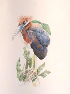 Herony III - color pencil drawing of newly hatched Heron