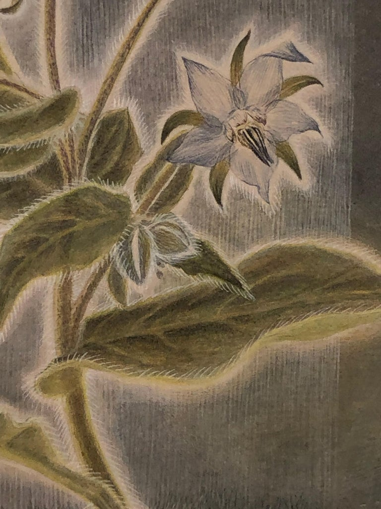 Borage with Rain - Botanical Watercolor in Shades of Blue, Grey and Green - Art by Christina Haglid