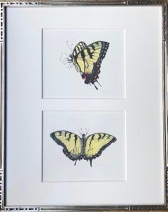 Swallow Tails, Two Yellow Tiger Swallowtail Butterflies, Color Pencil, Framed