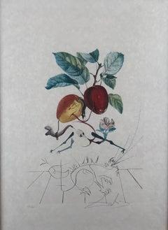 Pomme Dragon (Eve's Apple)