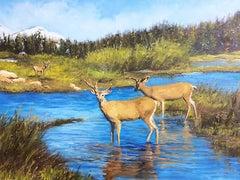 Teton Deer
