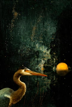 Nocturnal Crane