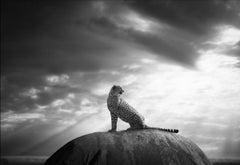 Björn Persson, Cheetah's Throne