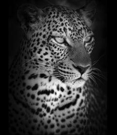 Björn Persson, Leopard Portrait