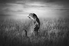 Björn Persson, Cheetah Land